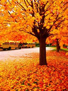 fall with buses